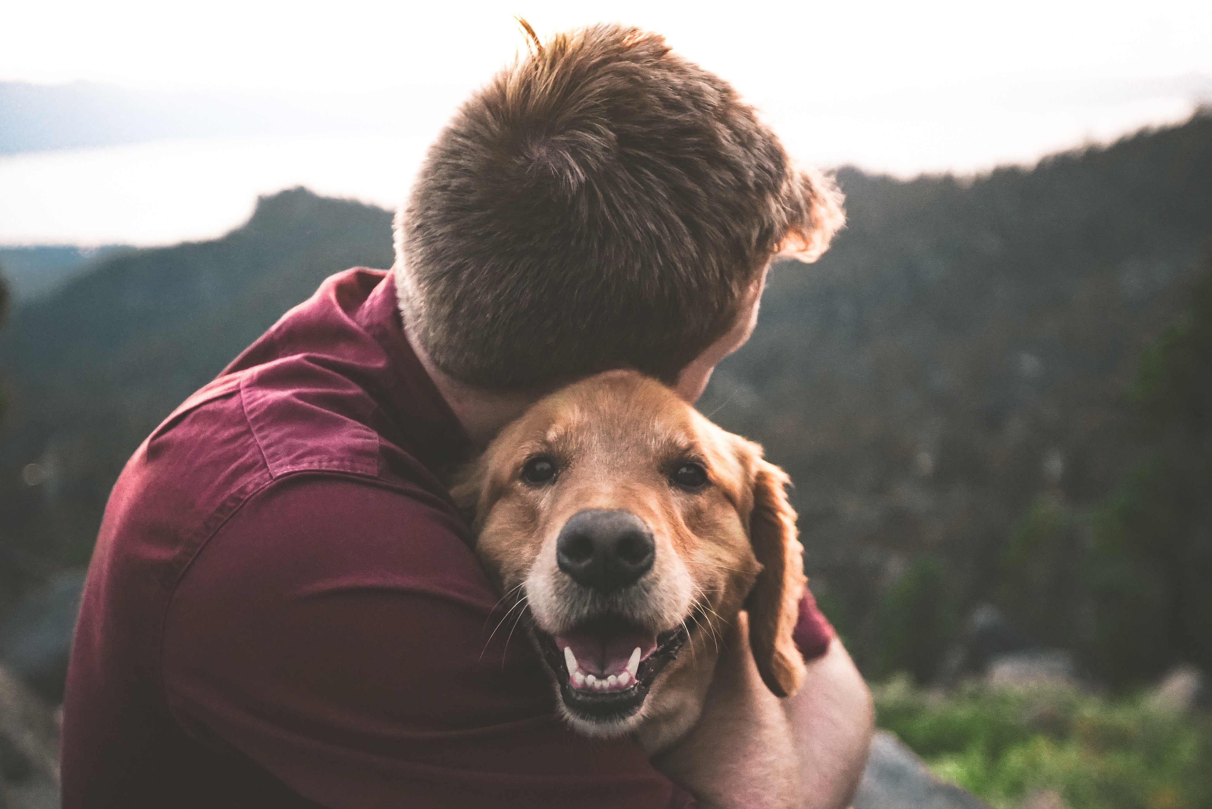 The Cancer Voice Asia | The healing effect of pets. Photo by Eric Ward on Unsplash..