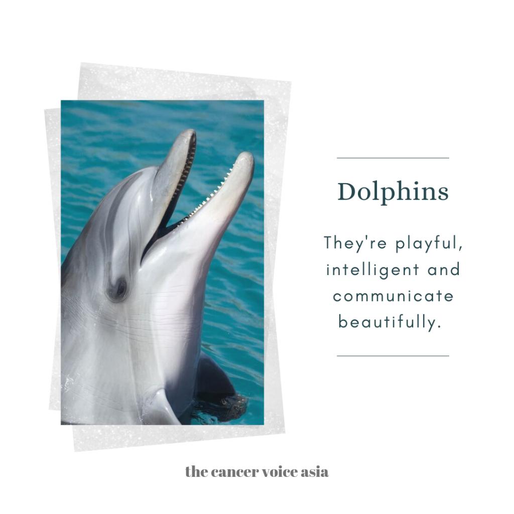 "alt=""dolphins"""