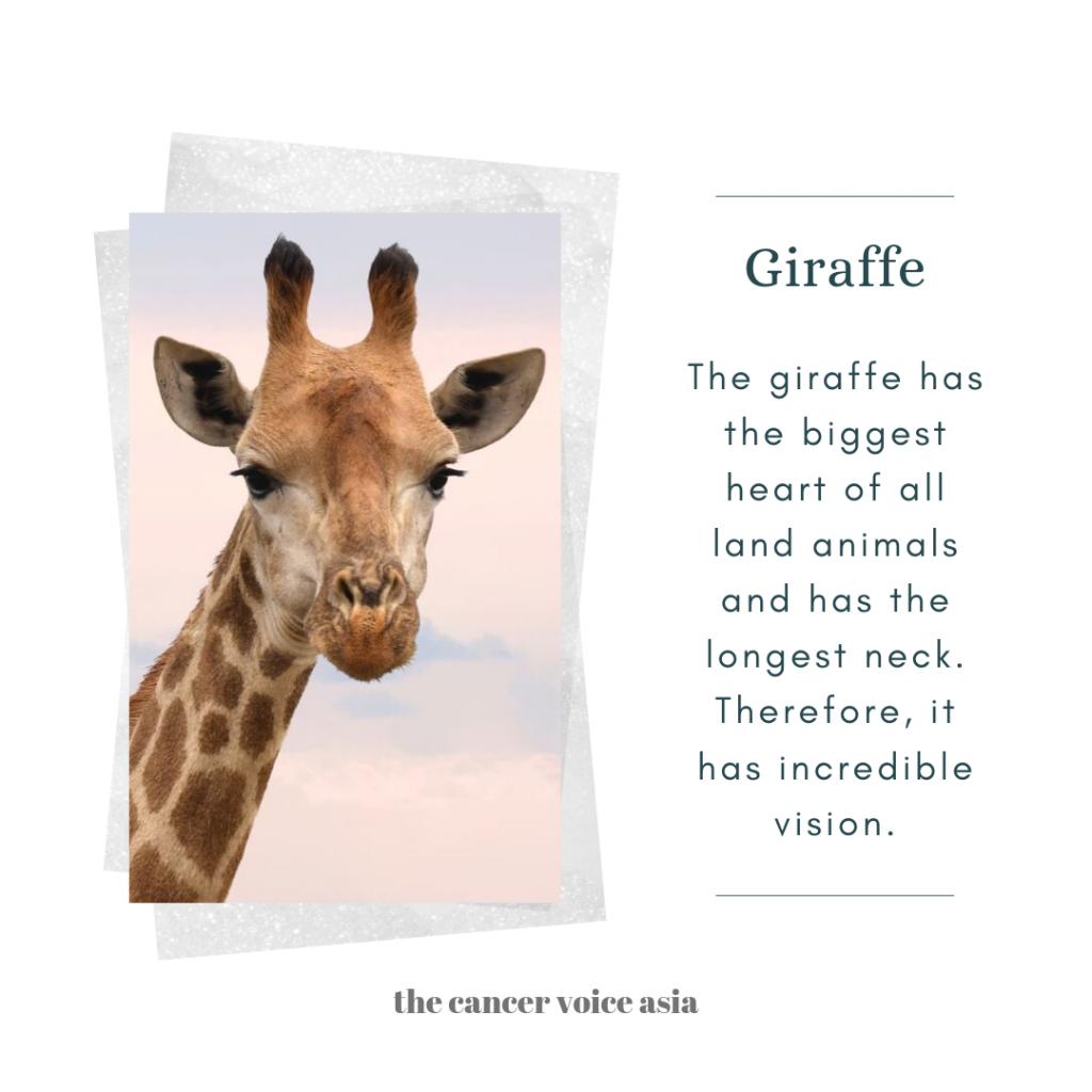 """alt=""""giraffe"""""""